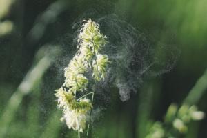 Allergia al polline come contrastarla naturalmente
